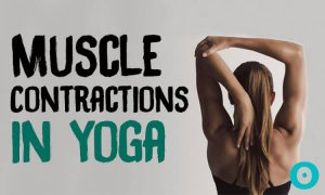 Gain a Deeper Understanding of Muscle Contractions in Yoga