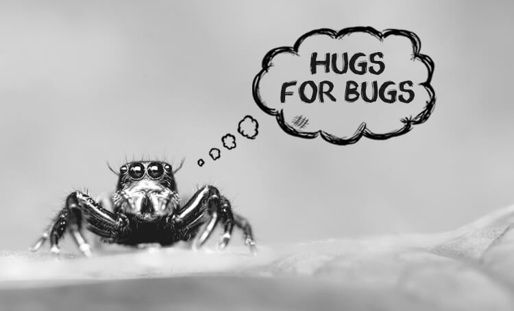 Nonviolence to bugs
