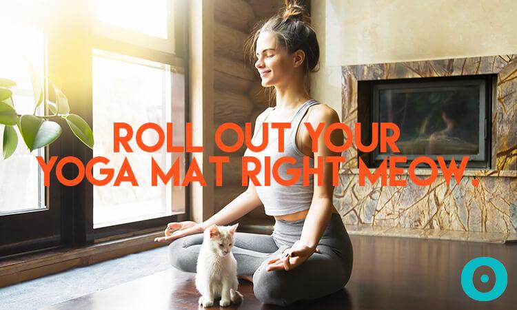 yoga and animals